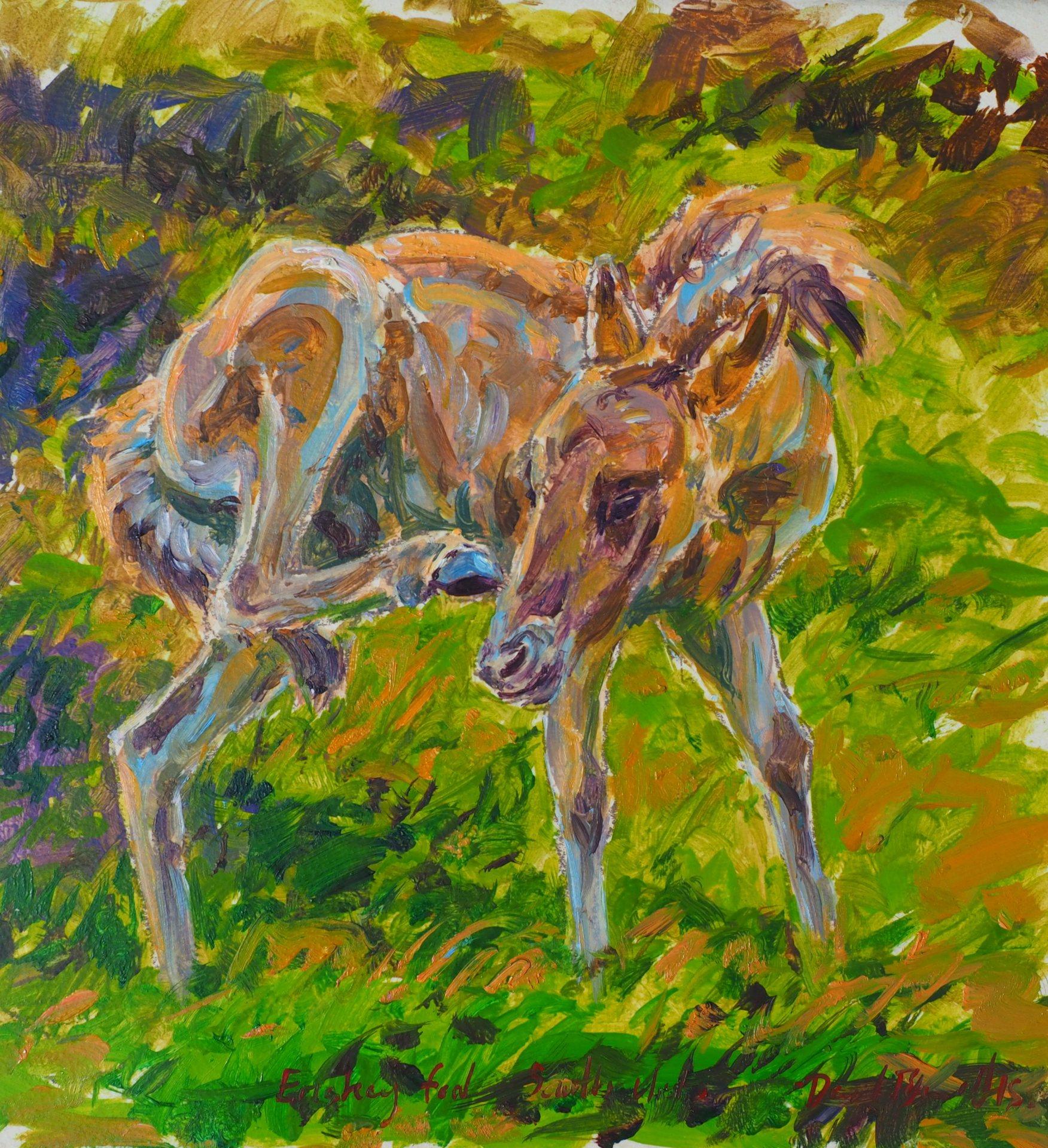 Eriskay Foal Study