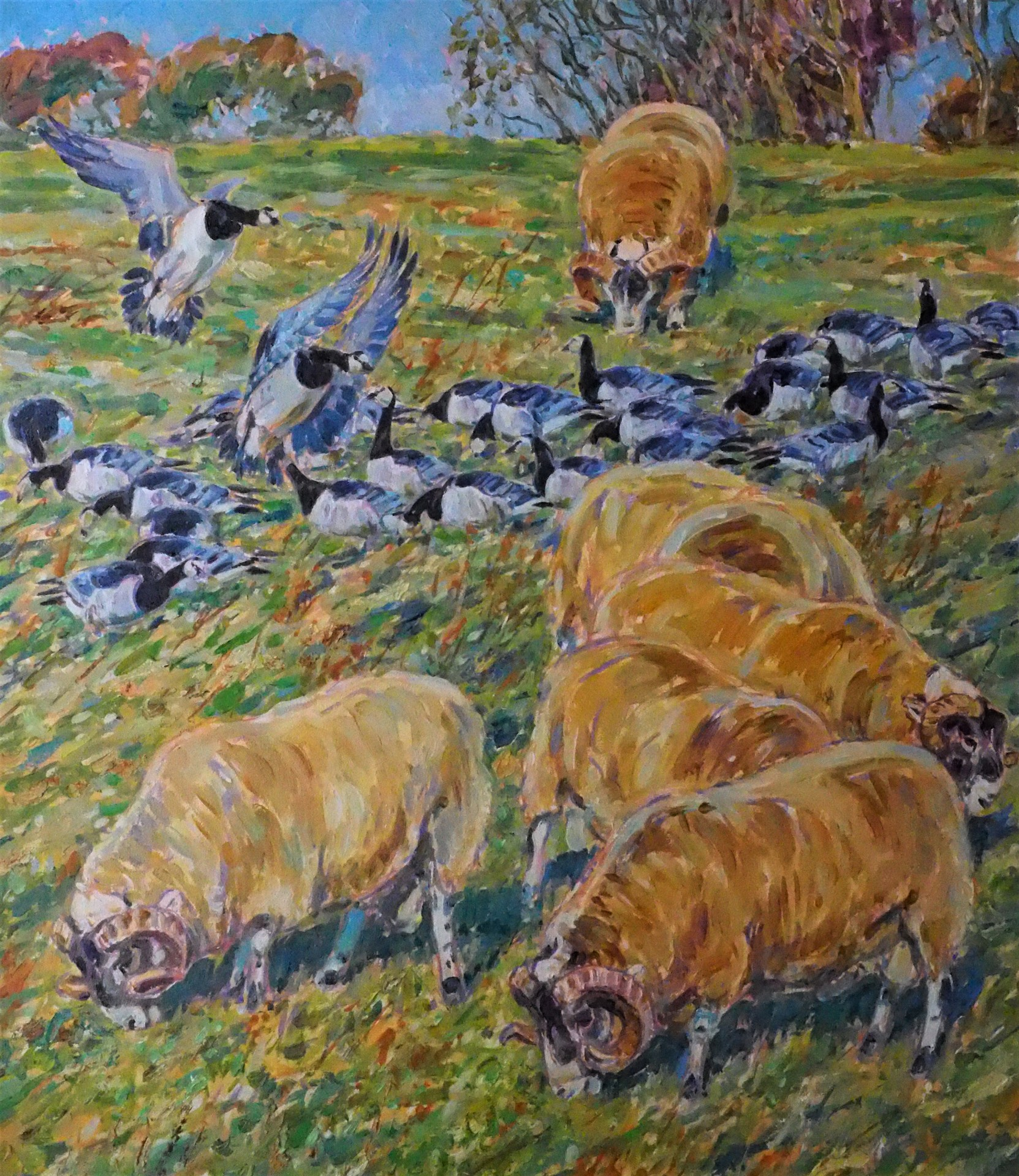 Tups and Barnacle Geese, Islay