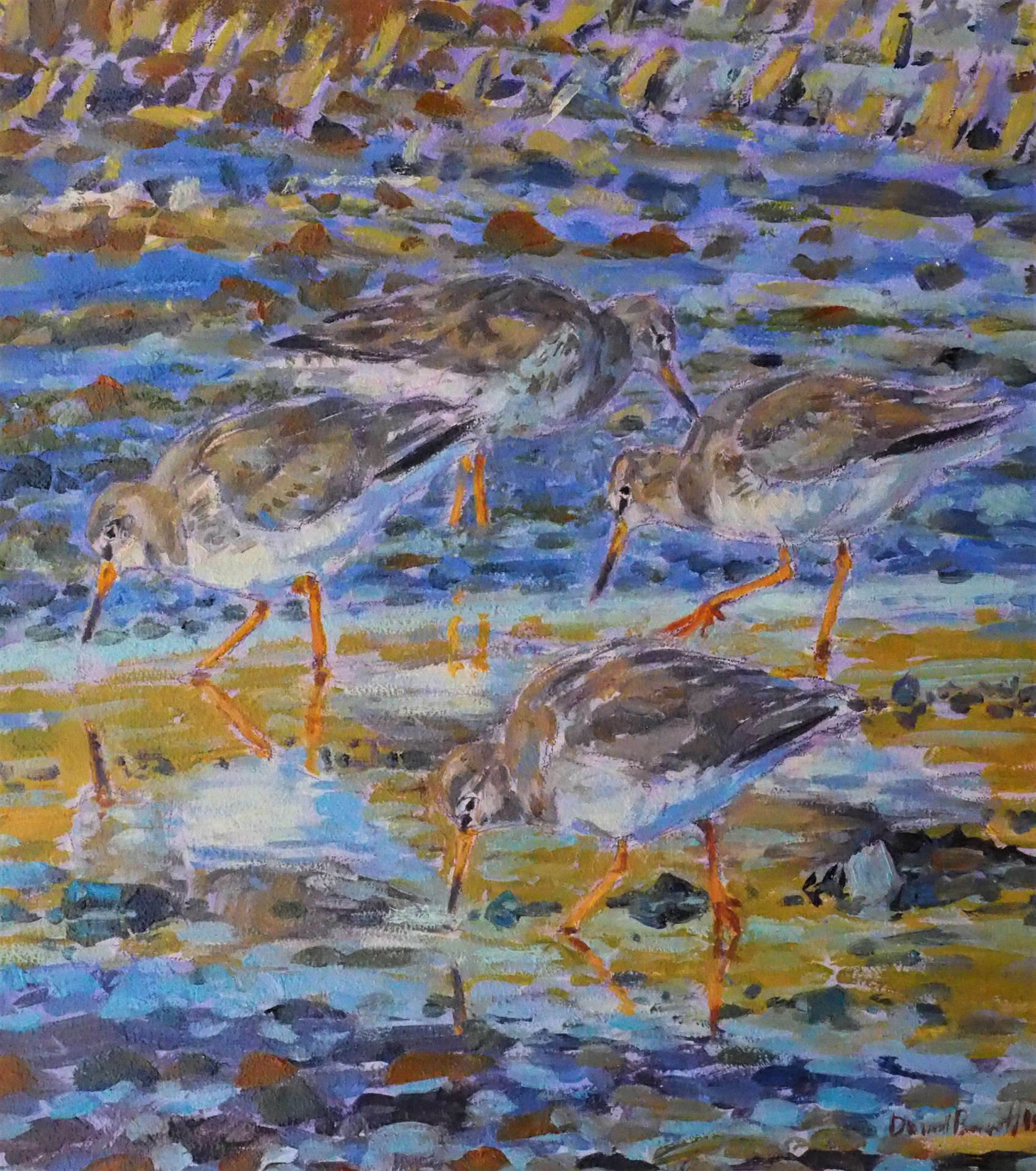 Redshank, Beadnell, Northumberland