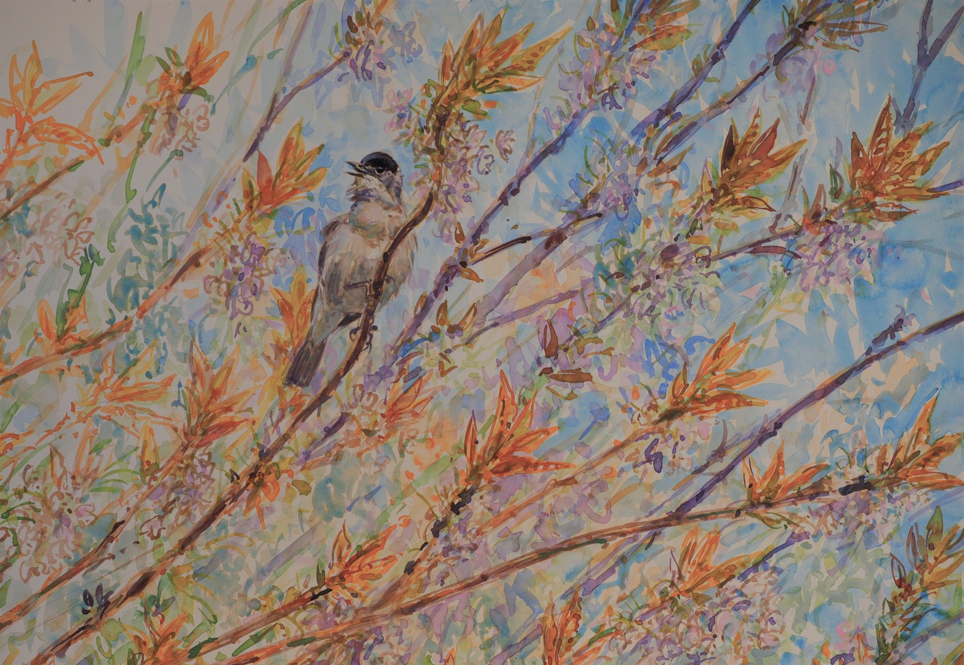 Blackcap in Flowering Cherry