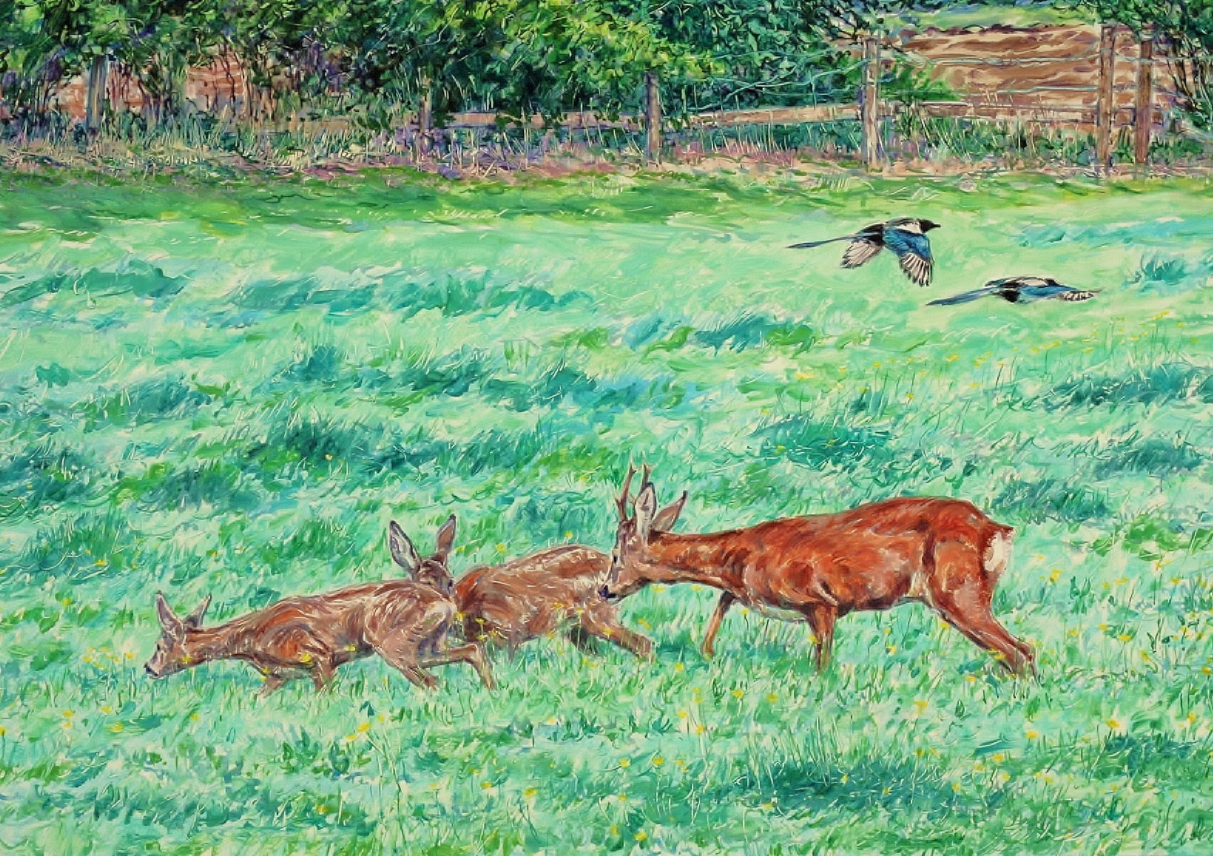 Roe Buck and Kids, Harrogate, North Yorkshire