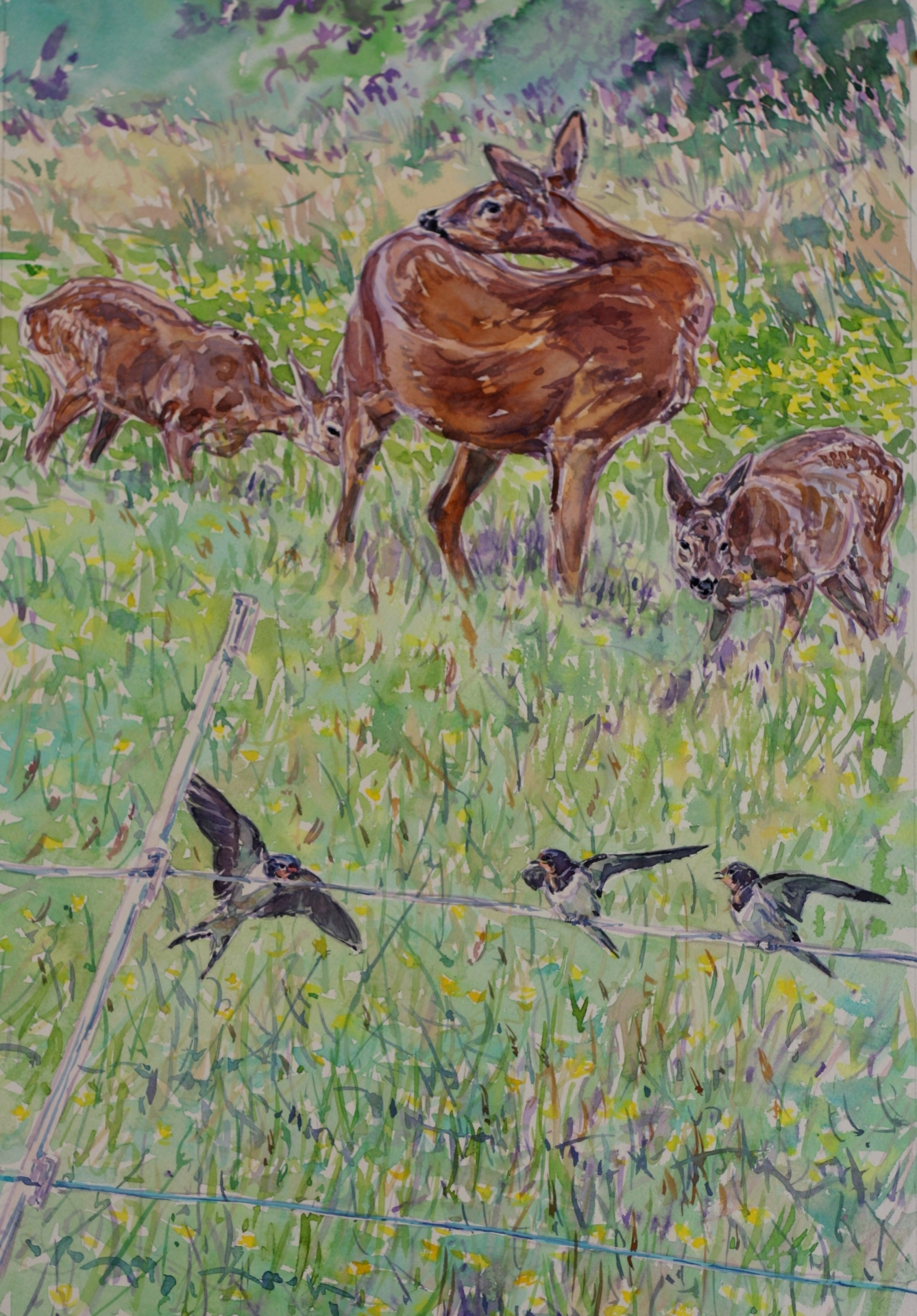 Roe Family and Swallows