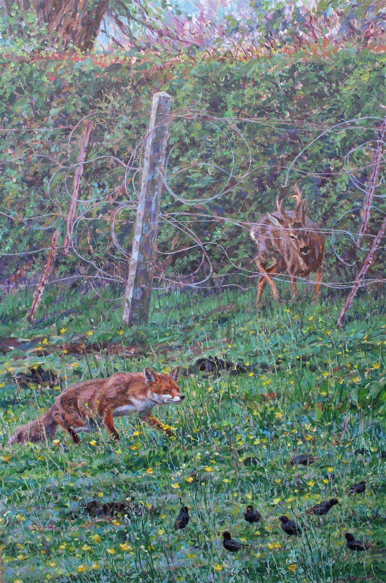 Fox Stalking Starlings, Harrogate