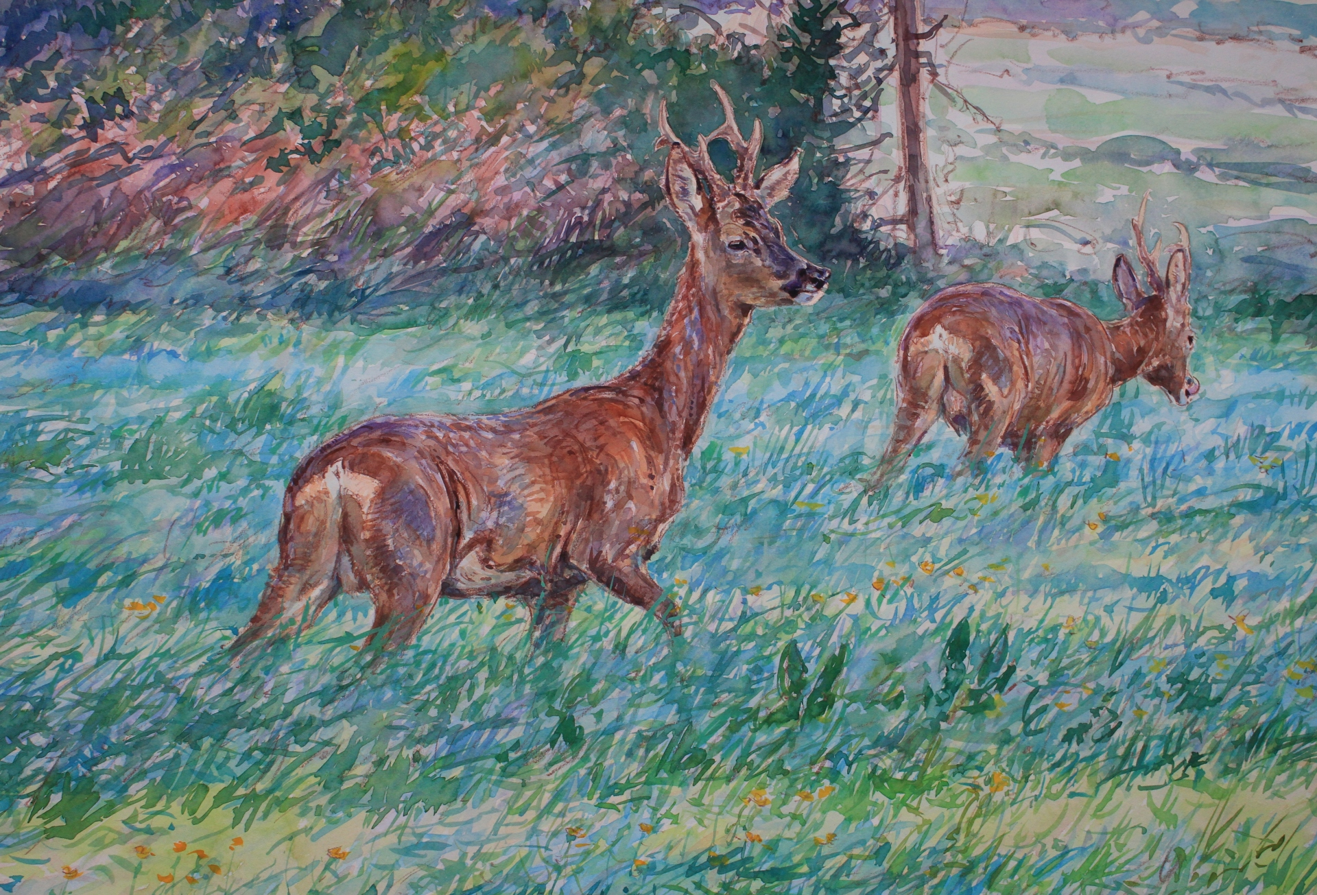 Young Roe Bucks, Nidd Gorge, North Yorkshire