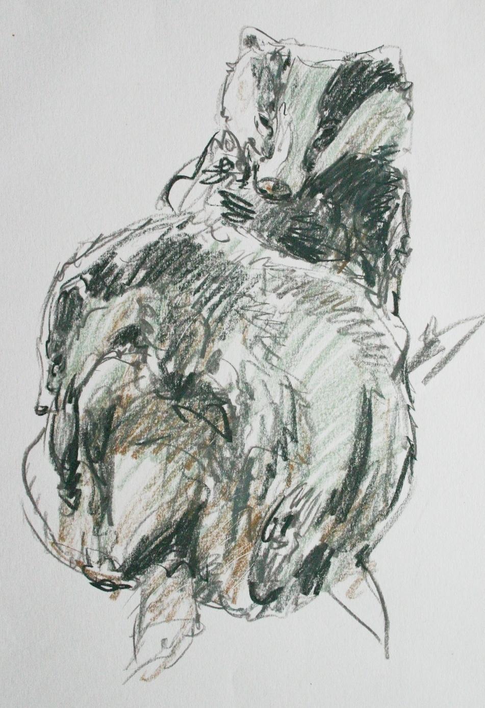 Badgers Grooming