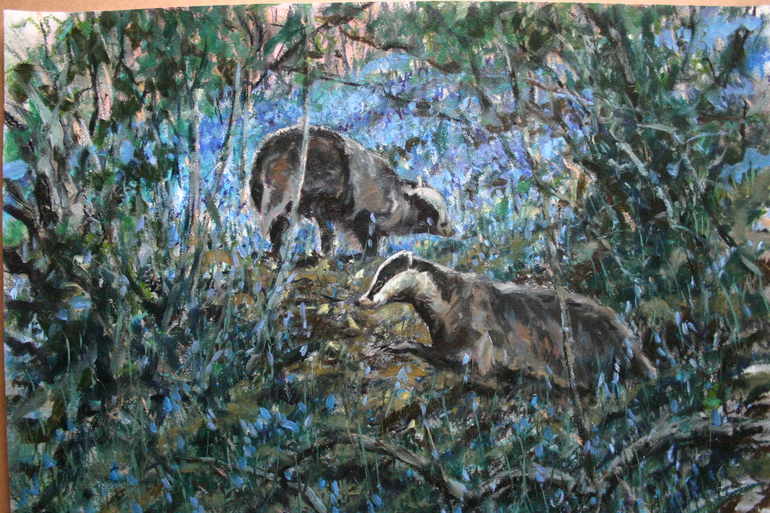 Badgers Emerging into Bluebells. Nidd Gorge