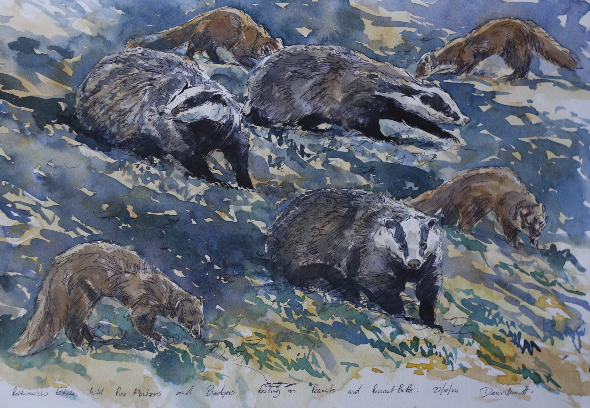 Badger and Pine Marten studies, Rothiemurchus estate