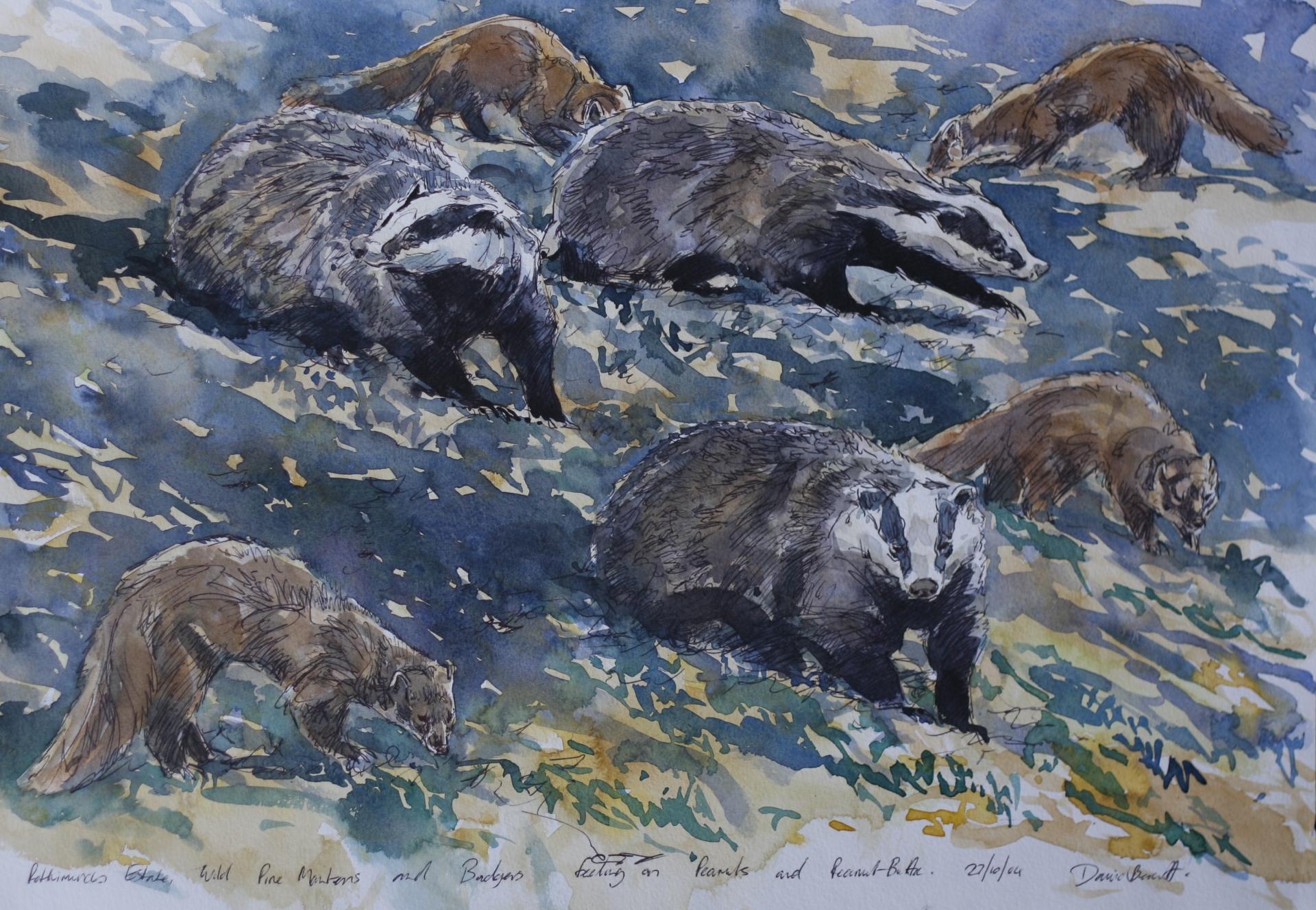 Badger and Pine Marten studies, Rothiemurchus estate