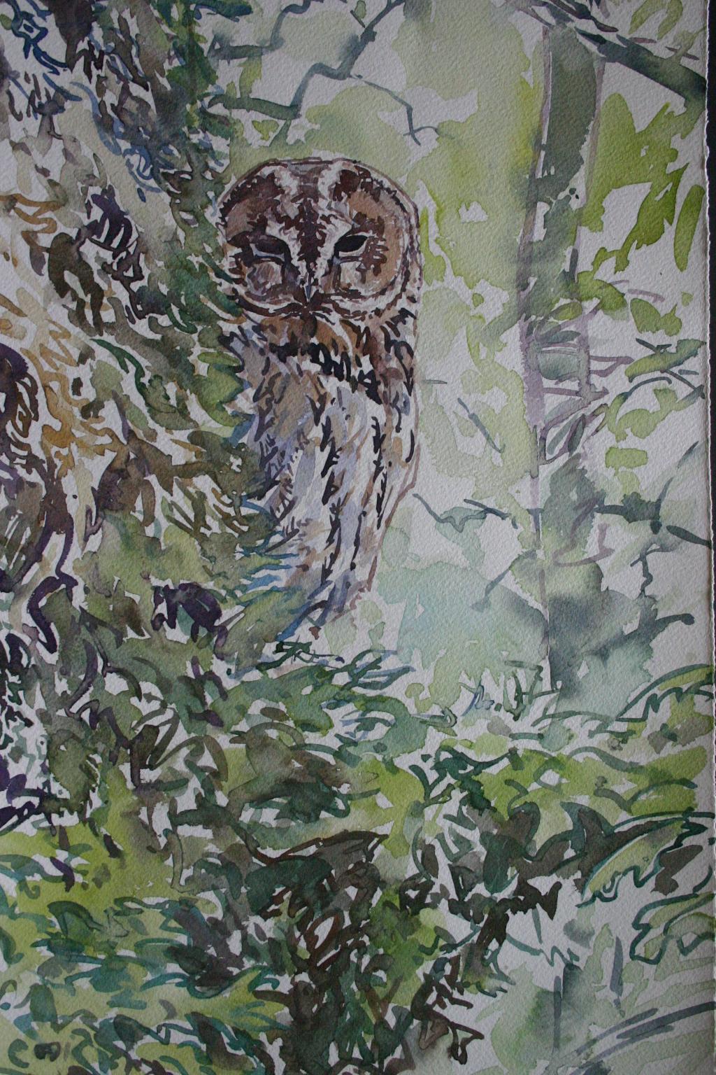 Roosting Tawny Owl