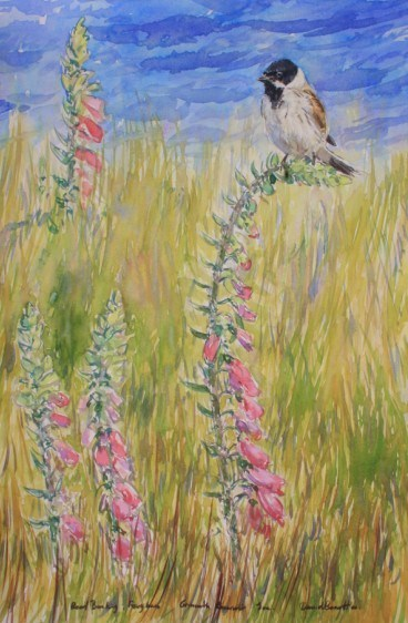 Reed Bunting and Foxglove