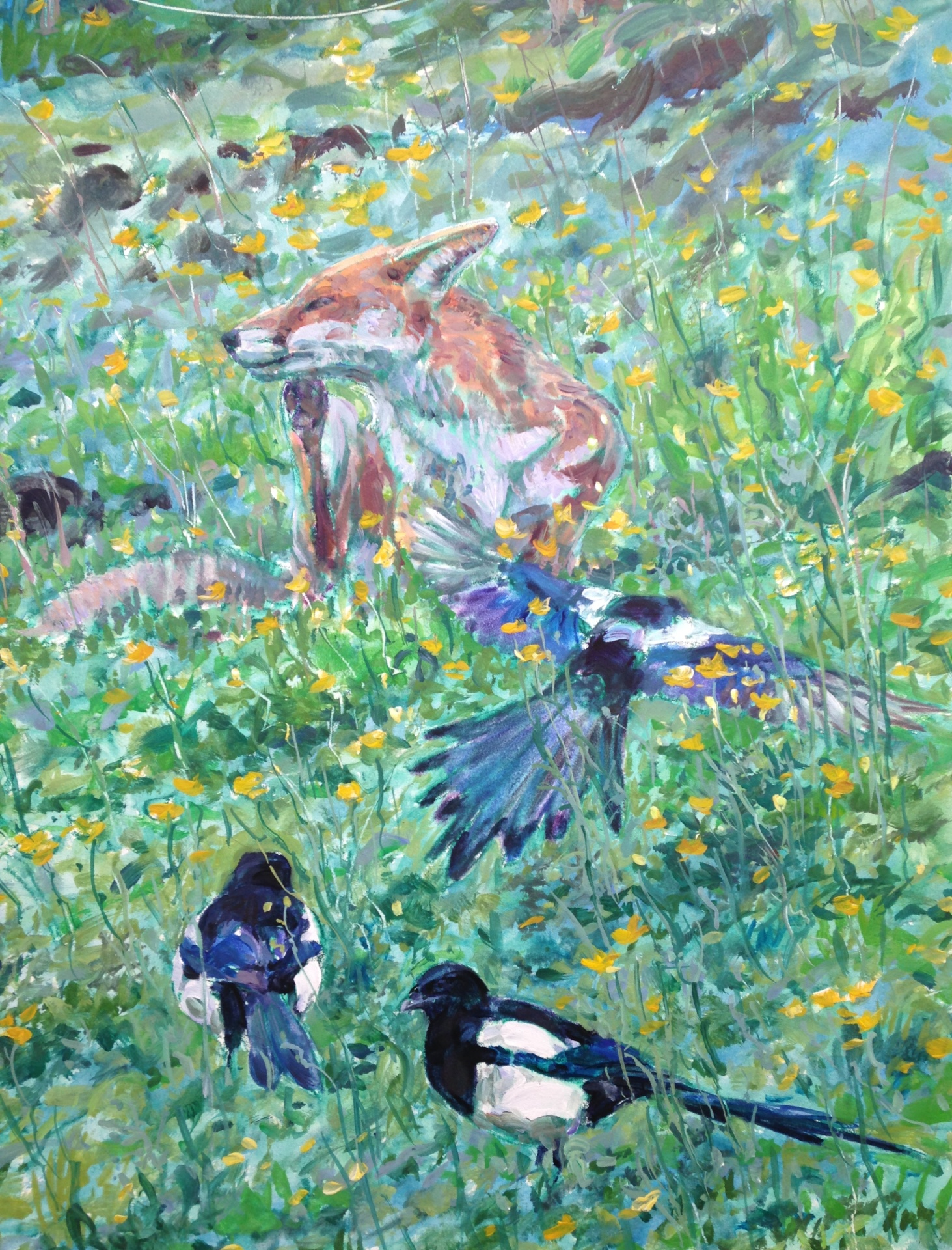 Fox and Magpies