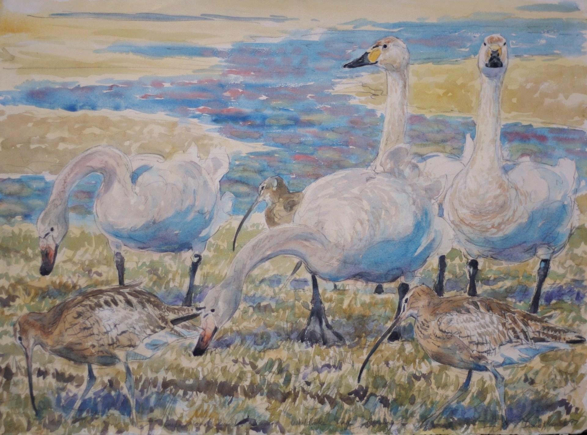 Whooper Swans and Curlew, Wheldrake Ings