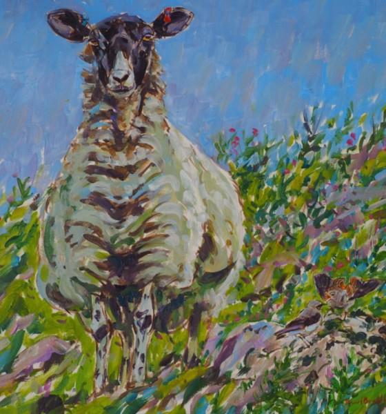 Black Faced Ewe and Wheatear, Malham