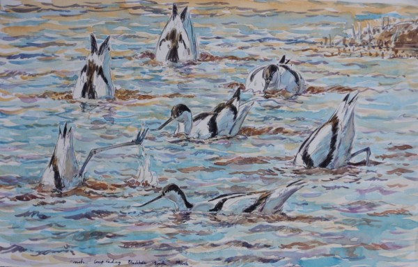 Avocets Upending, Blacktoft Sands