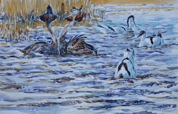 Great Crested Grebe and Avocets