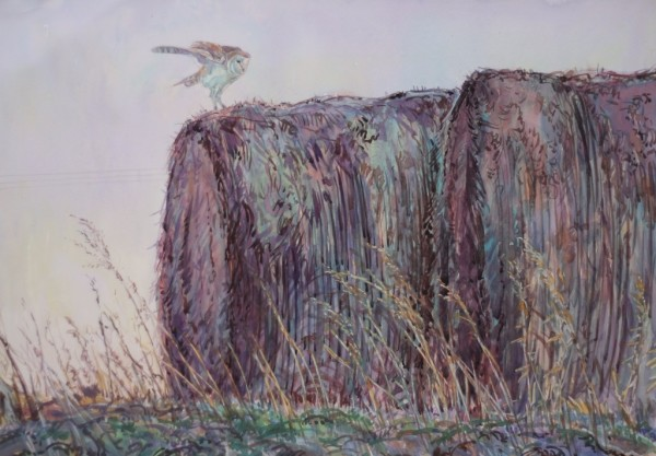 Barn Owl and Hay Bales, Hagg Bridge, Pocklington Canal