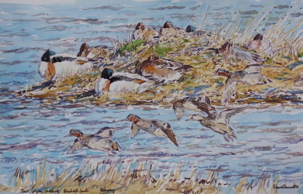 Teal, Widgeon and Shellduck, Blacktoft Sands