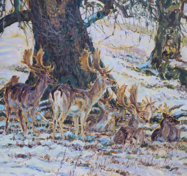 Fallow Deer in Snow