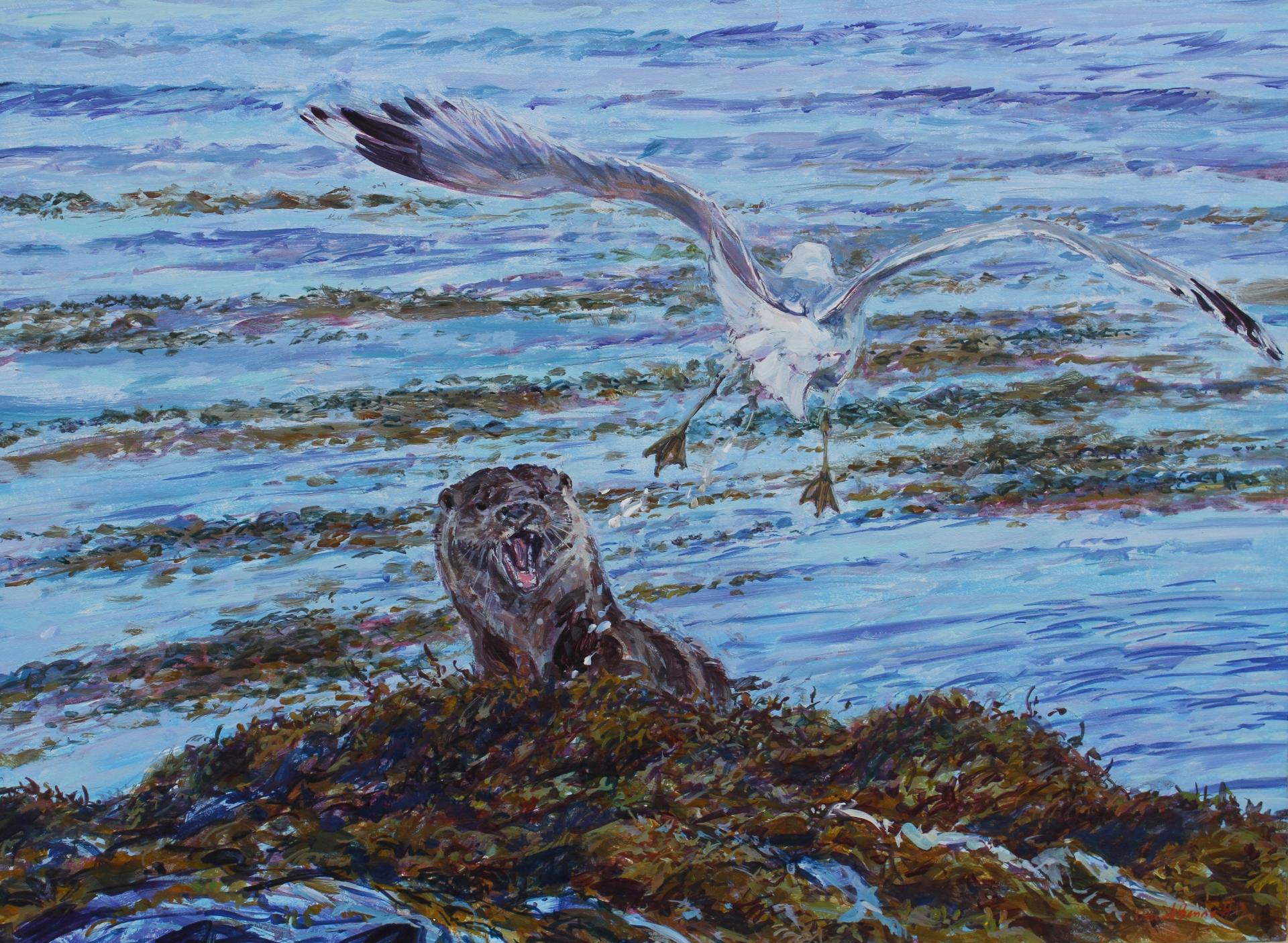 Common Gull mobbing Dog Otter