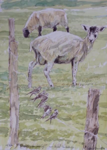Sheep and Sand Martins