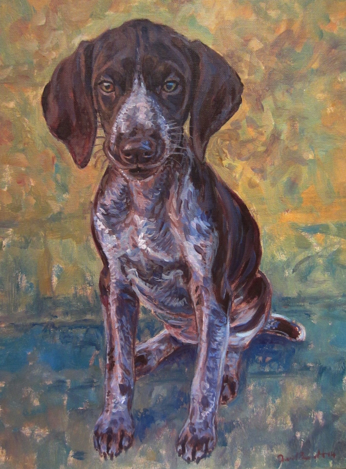 Lotty, German Short Haired Pointer