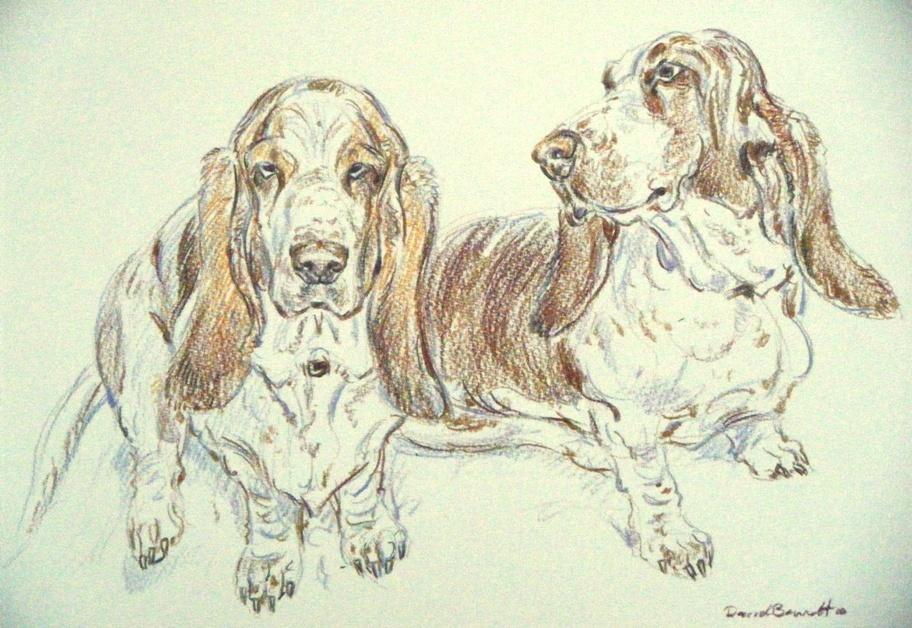 Basset Hounds, Sketch