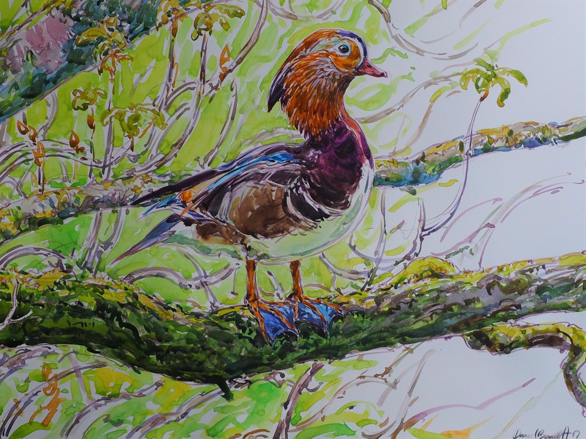 Mandarin Duck, Bolton Abbey