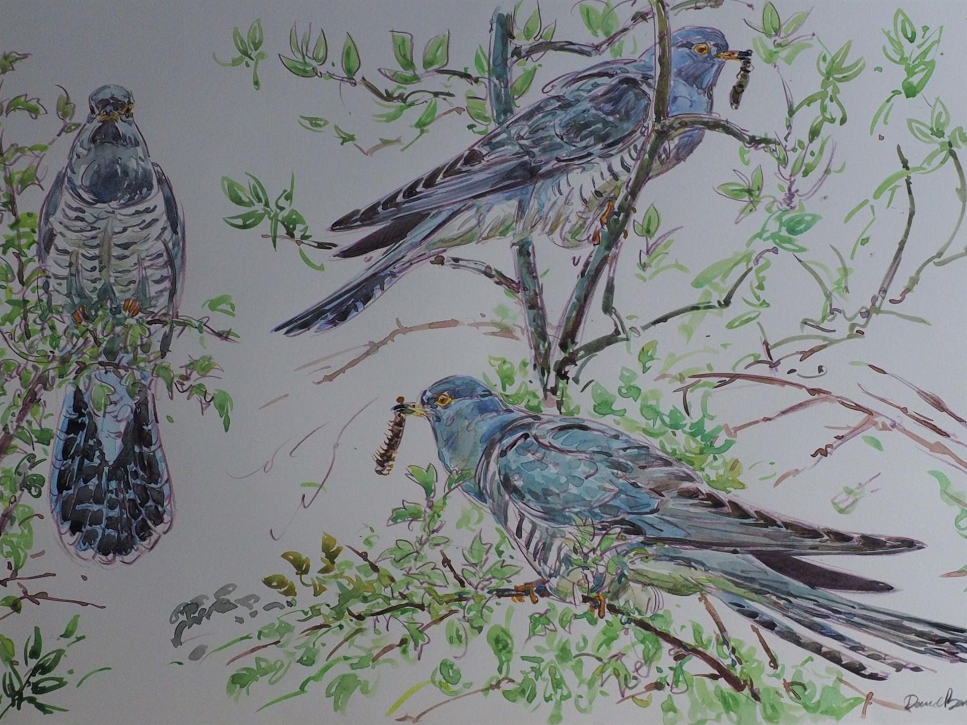 Cuckoo, Melbourne