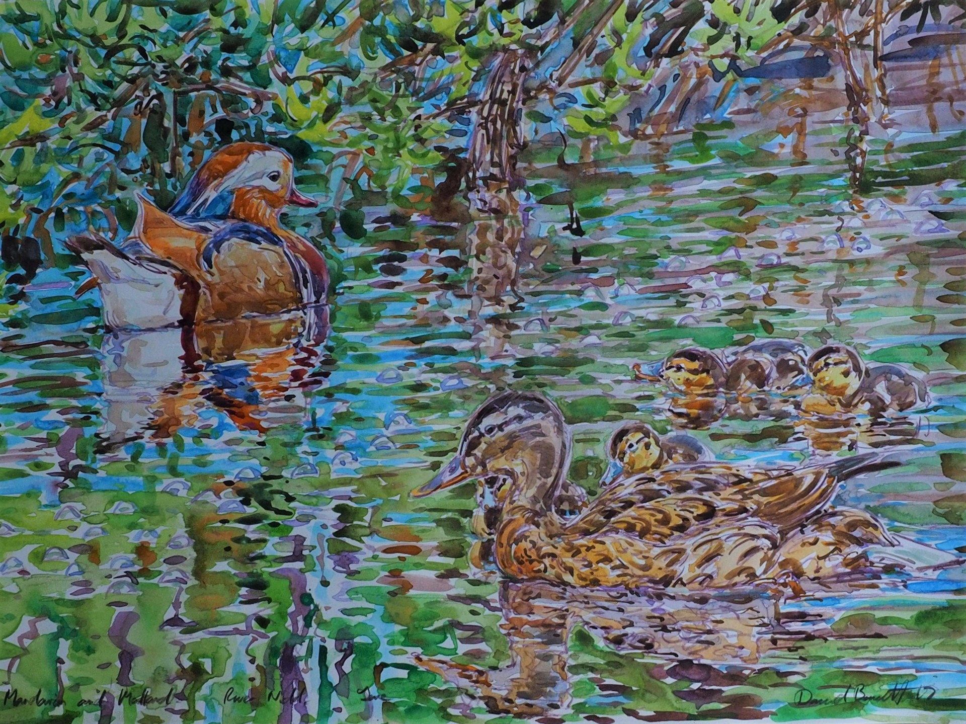 Mandarin and Mallards, River Wharfe