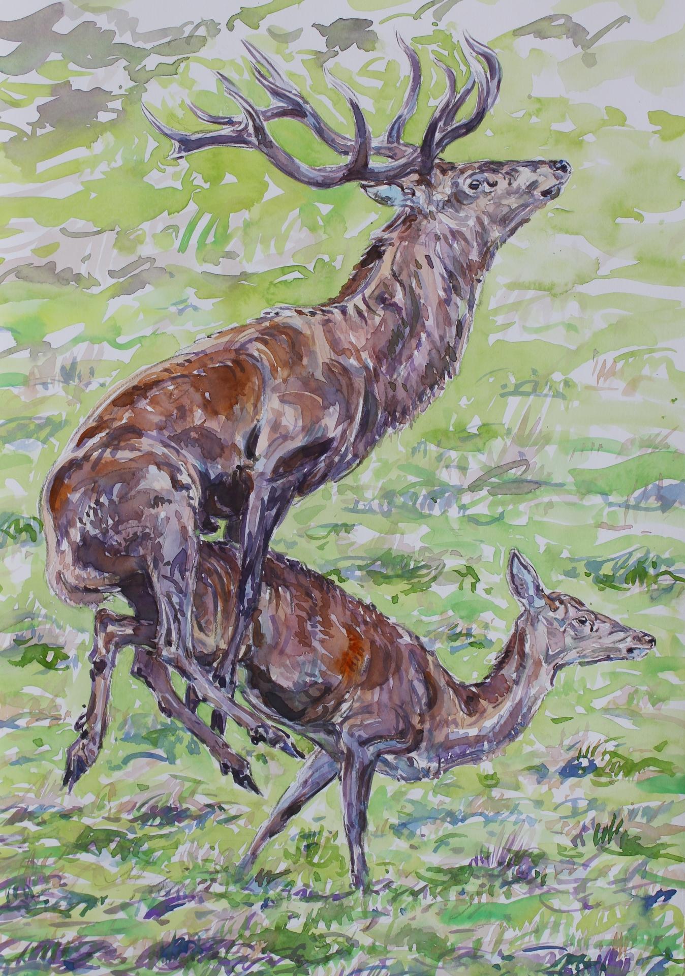 Red Deer Thrust