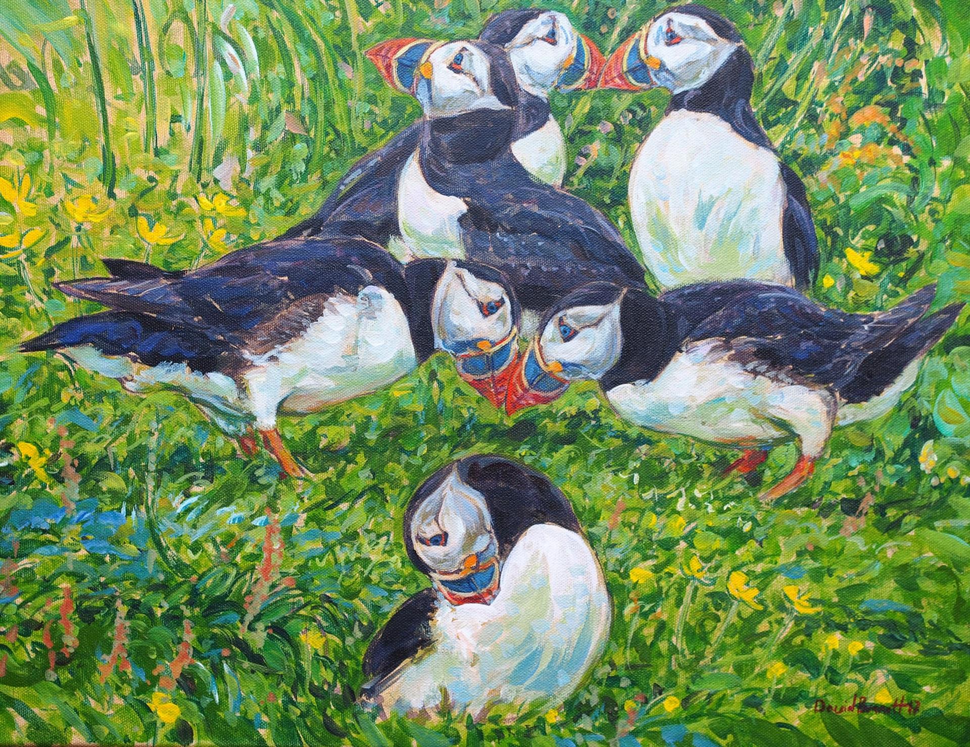 Puffin Kiss, Treshnish Isles