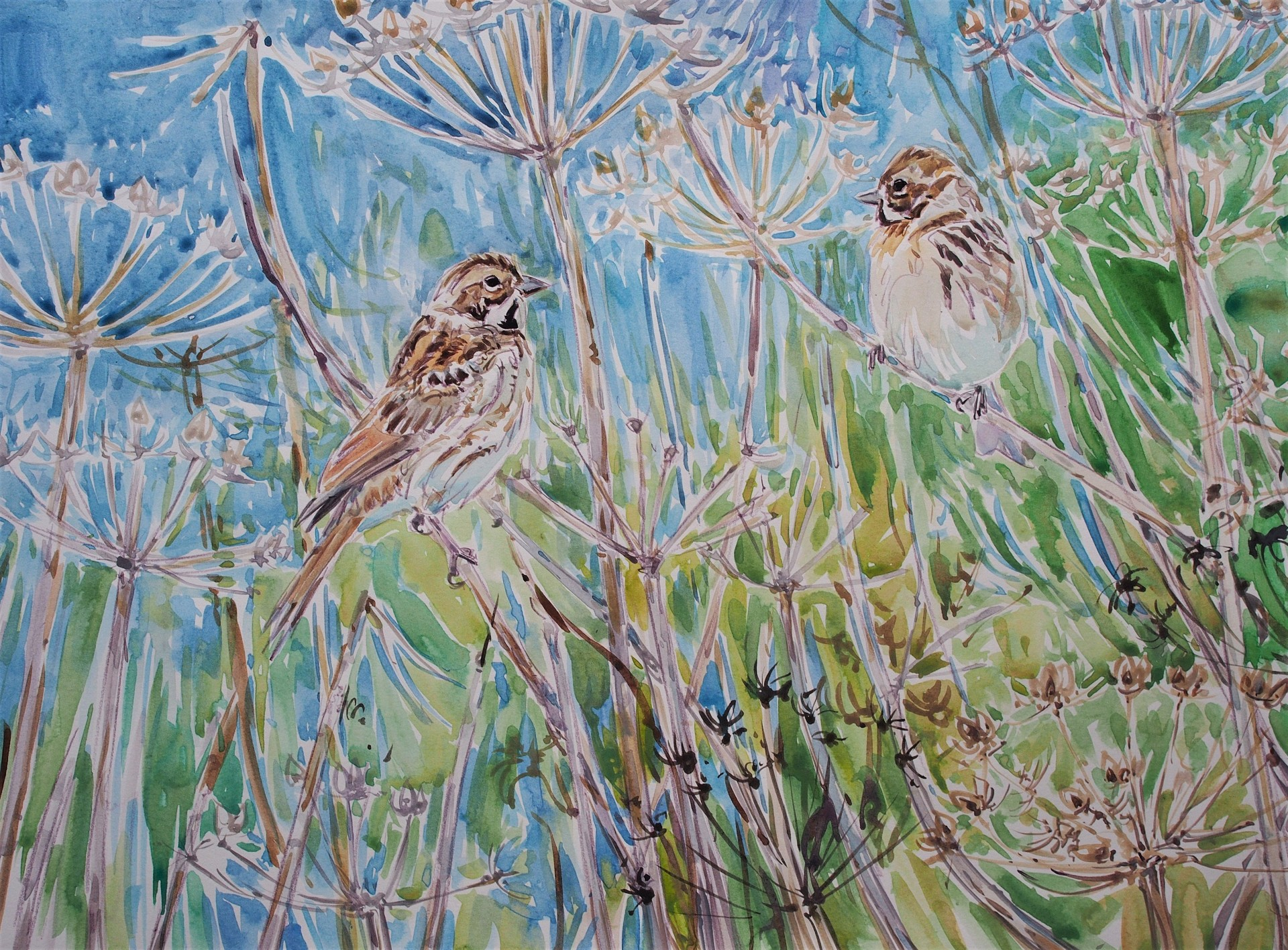Reed Buntings, Thornton Lock, Pocklington Canal