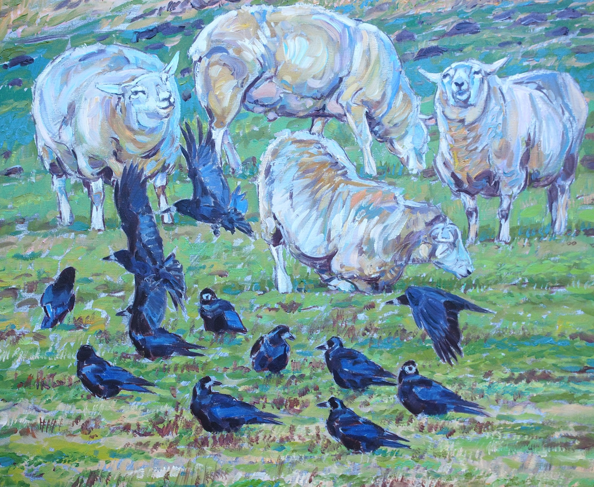 Rooks and Sheep
