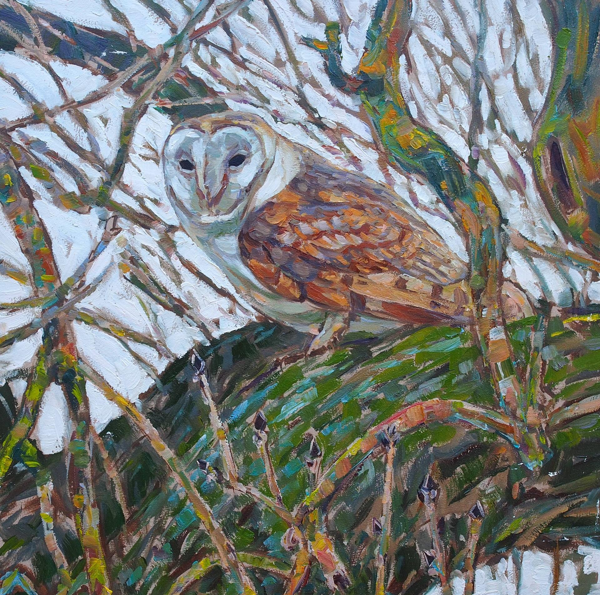 Barn Owl in Ash Tree