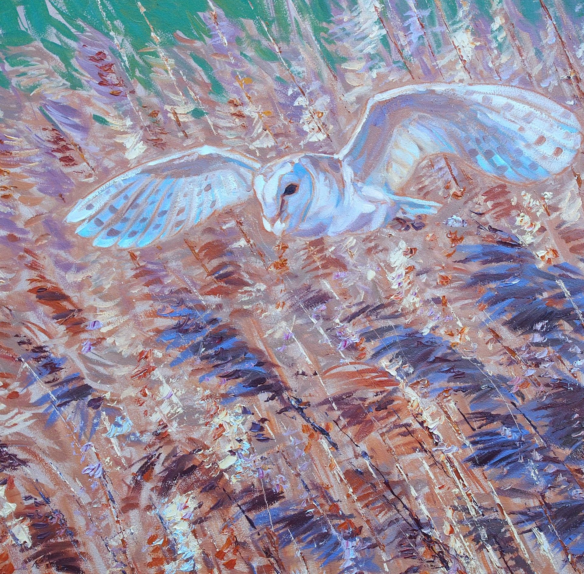 Hunting Barn Owl
