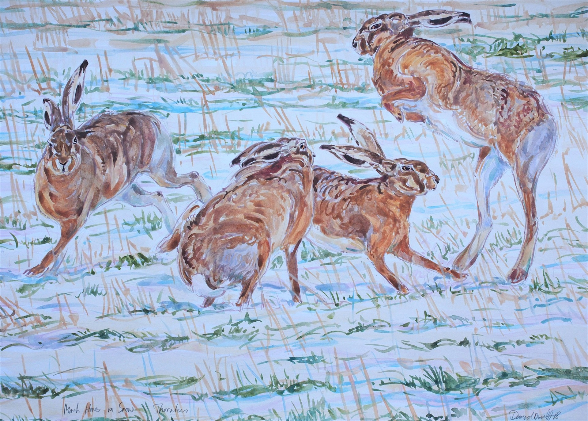Hares Boxing in Snow