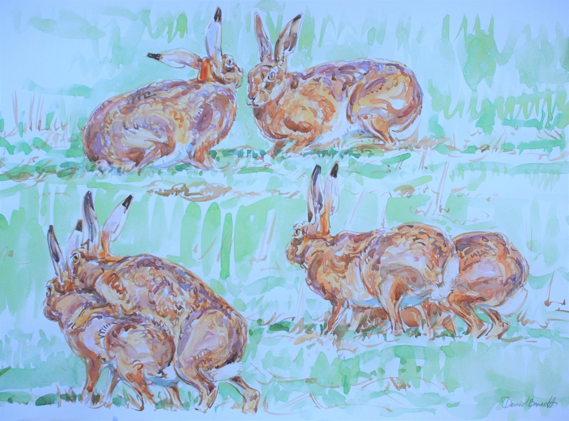 Hare Couple Studies