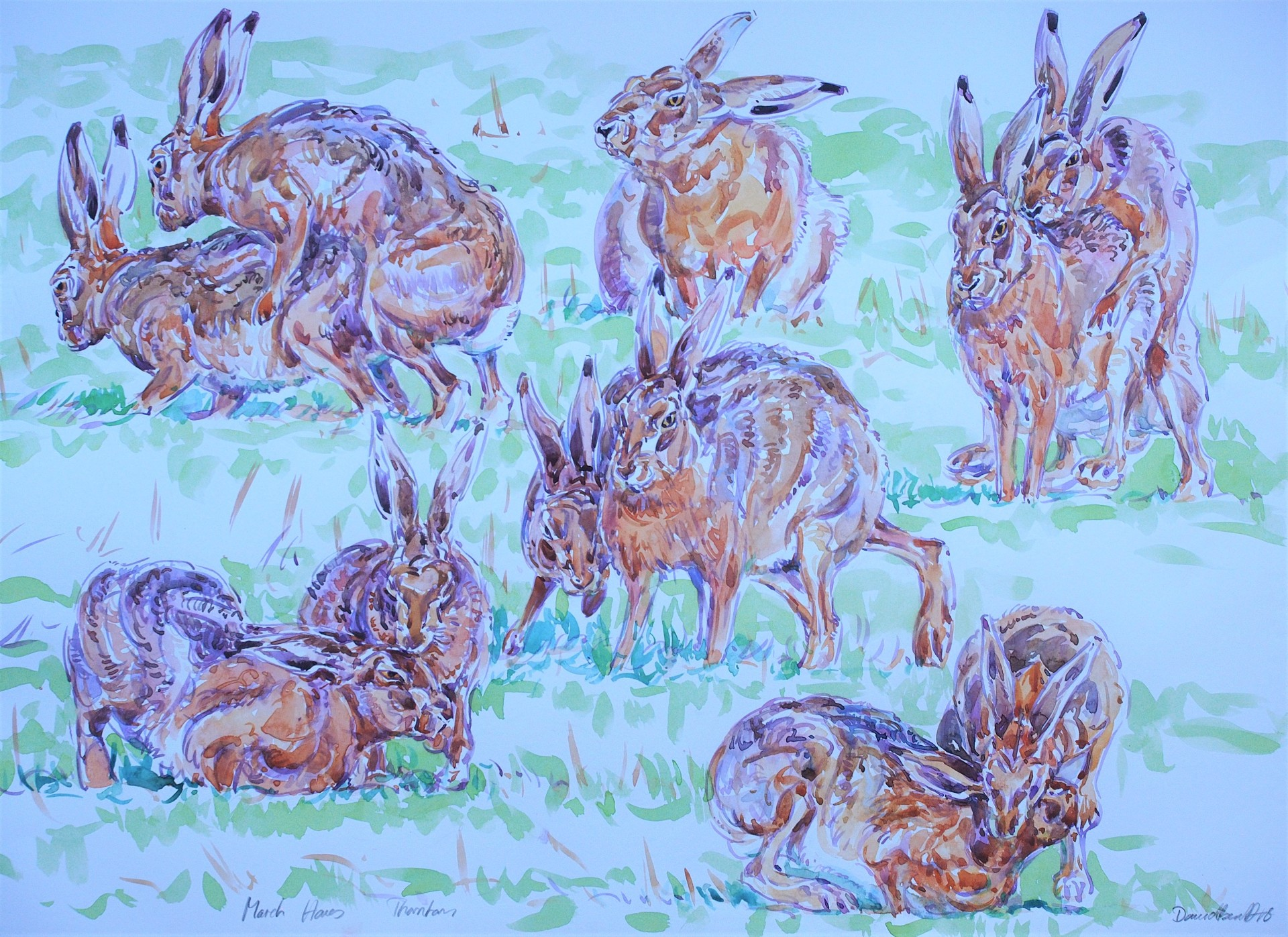 Courting Hare Studies