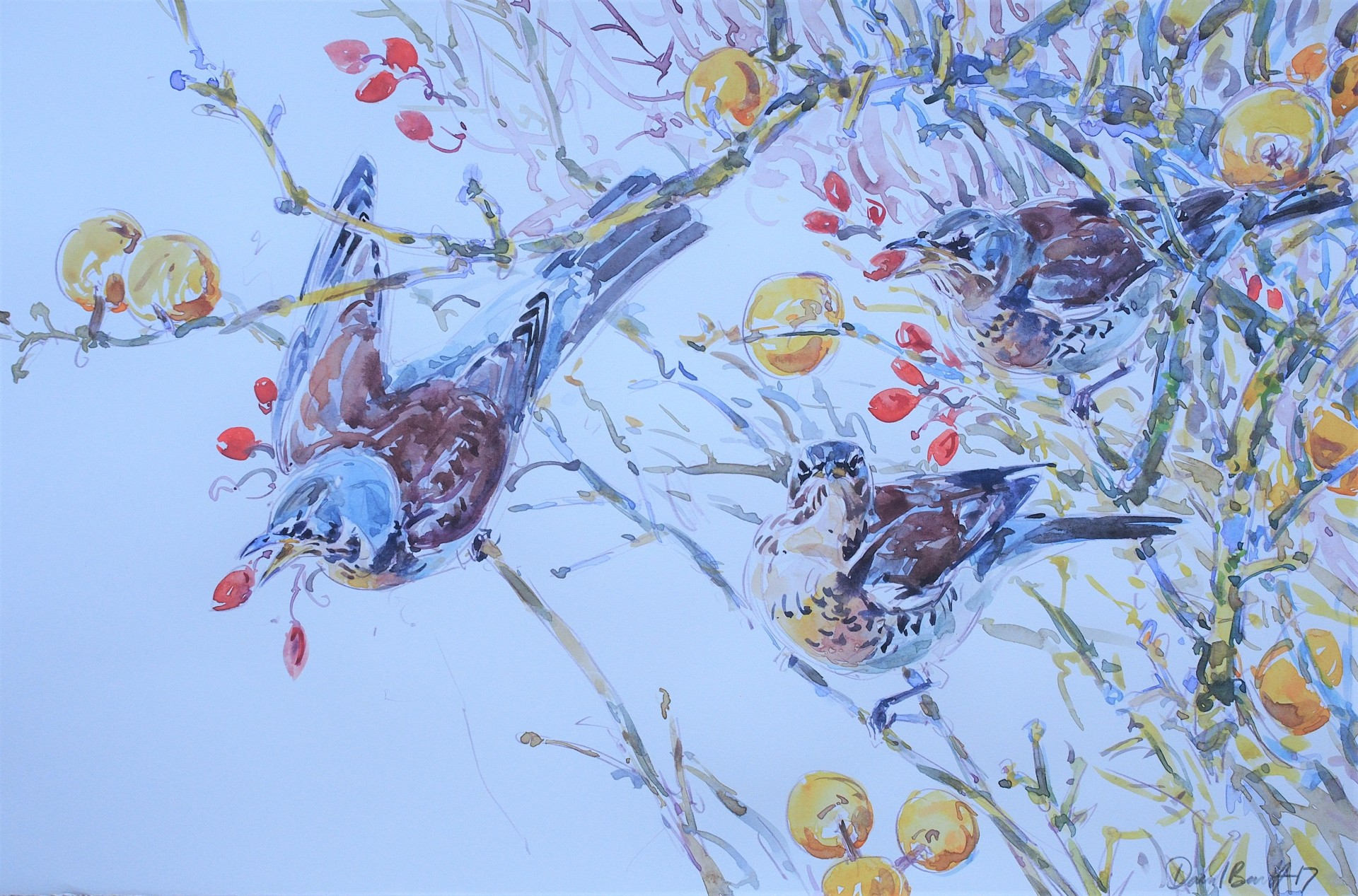Fieldfare, Hips and Crabs