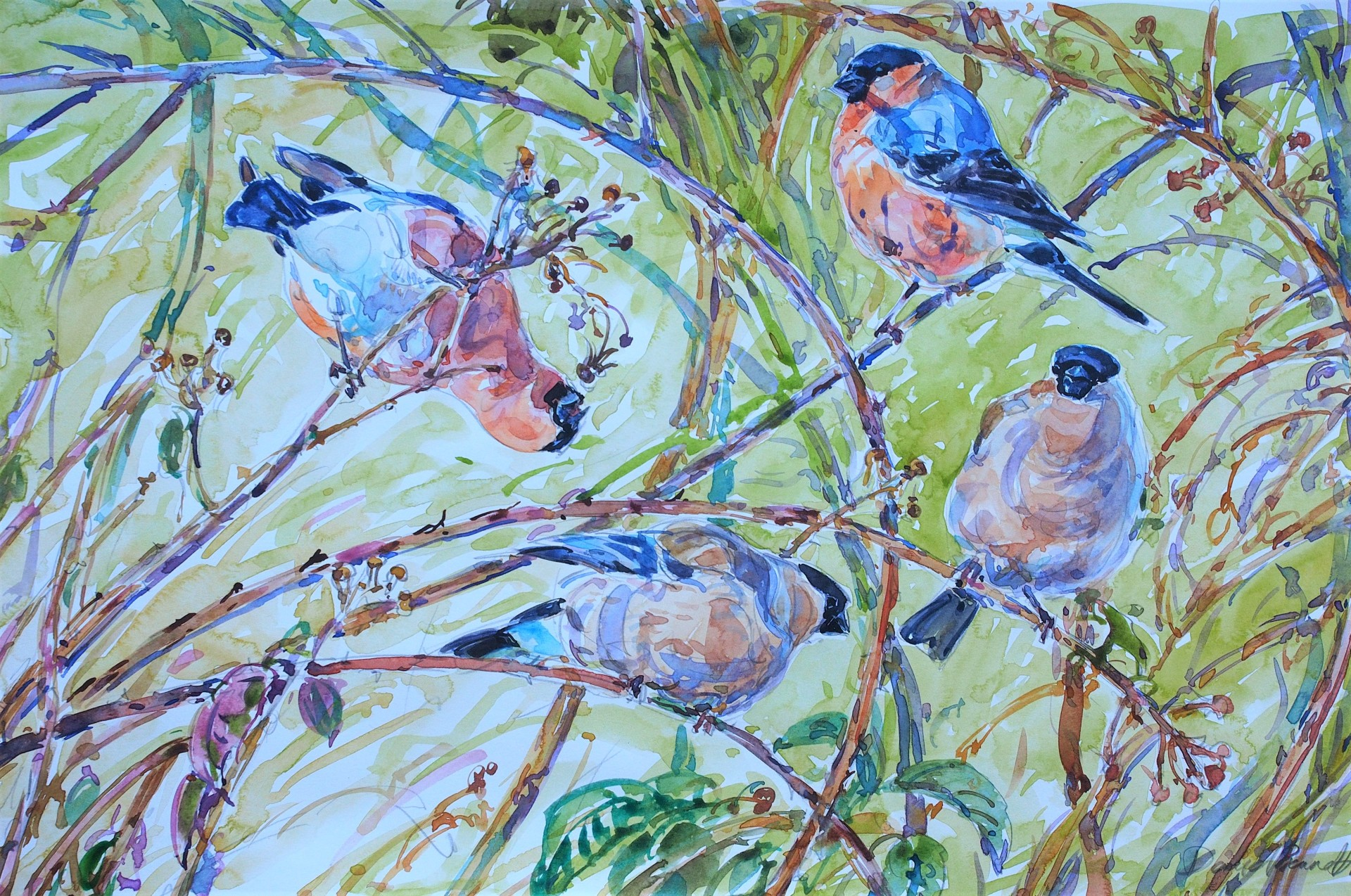 Bullfinches and Bramble