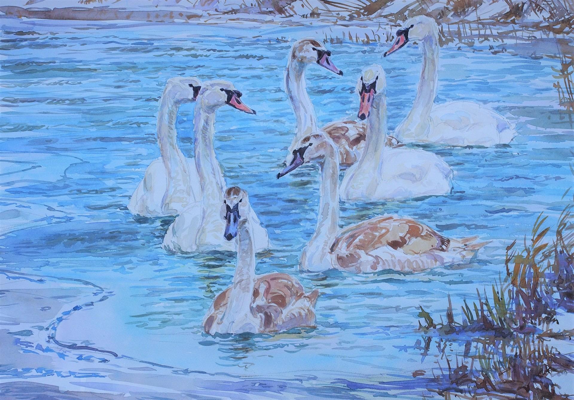 Mute Swans on Frozen Canal, Hagg Bridge