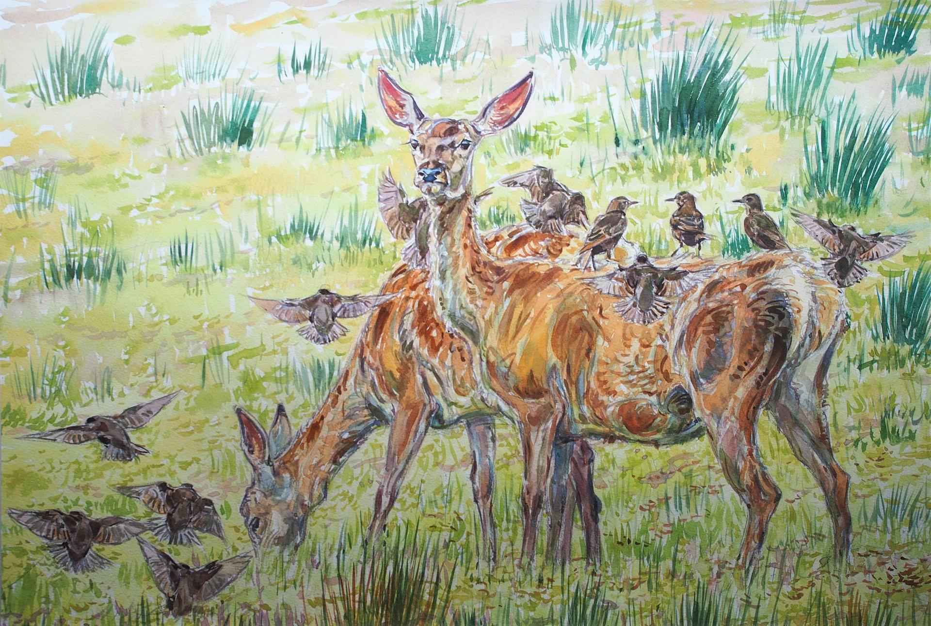 Red deer and Starlings