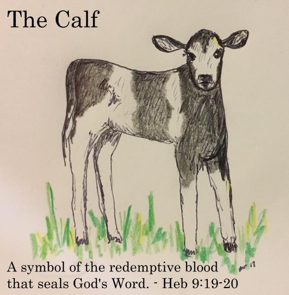 The Calf