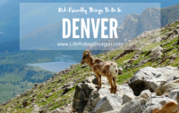 Kid-Friendly Things to do in Denver