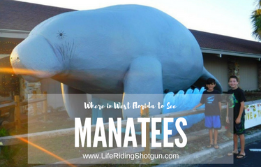 Where To See Manatees In West Florida