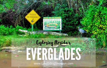 Exploring Florida's Everglades
