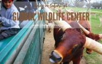 On Safari at Global Wildlife Center