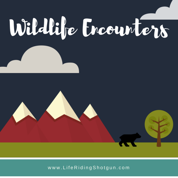 Wildlife Encounters Vlog