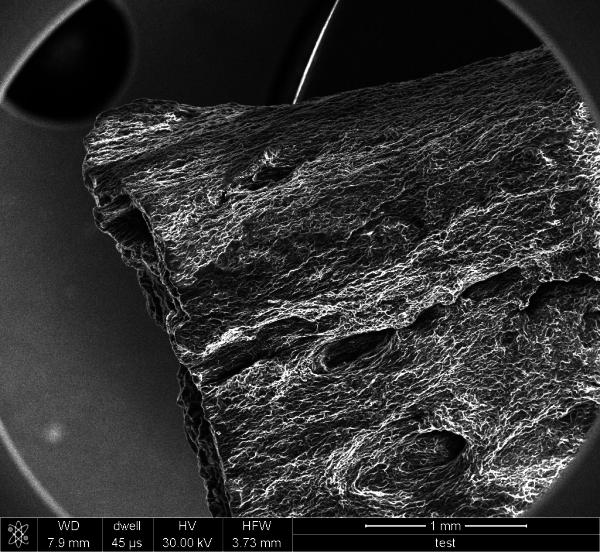 Cyberwood, Plant Nanobionic Material