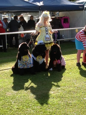 Newfoundland Dog fancy dress